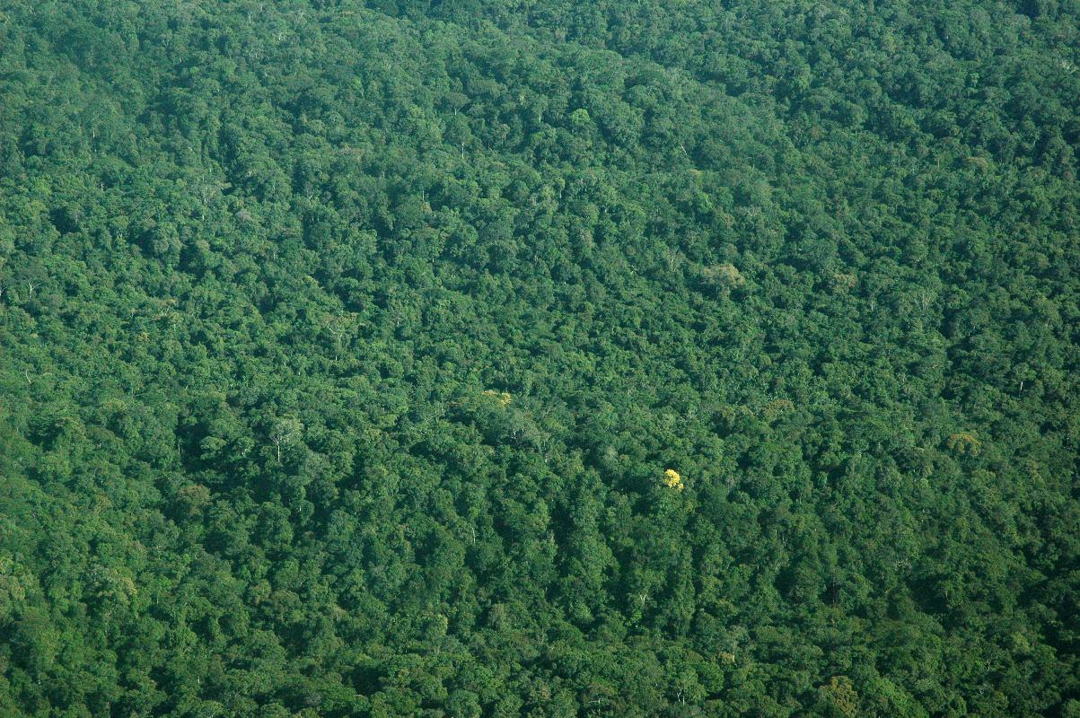 Rainforest Canopy at Animal Corner - Animals, Animal, Wildlife